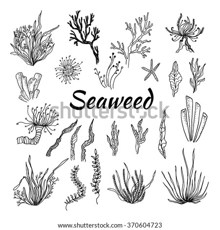 Hand drawn vector illustration - Set with seaweed. Sketch - stock vector