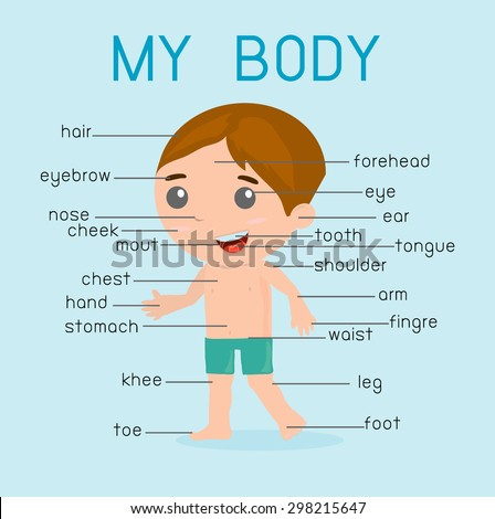 """""""My body""""  Illustration poster of the parts of the body for kids, With pointers and labels on separate layers. - stock vector"""