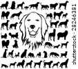 44 pieces of detailed vectoral dogs silhouettes. - stock vector