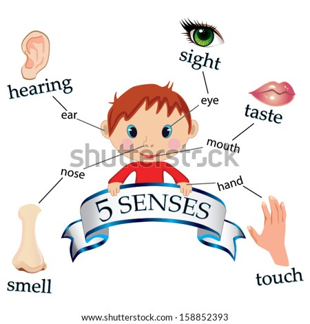 5 senses educational concept vector - stock vector