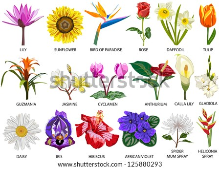 african violet stock photos images pictures shutterstock