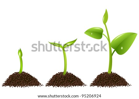 3 Sprouts Isolated On White Background, Vector Background - stock vector