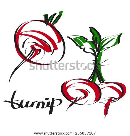 turnip - stock vector