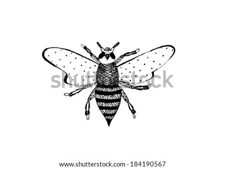 Wasp - stock vector