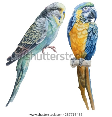 Watercolor birds.  Blue budgerigar and parrot macaw. Vector. Hand drawn. - stock vector