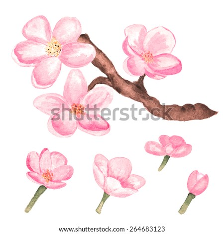 Watercolor branch blossom sakura, cherry tree and flowers isolated on white background. Hand painting on paper - stock vector