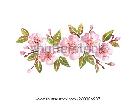 Watercolor cherry branch with flowers isolated on white background - stock vector