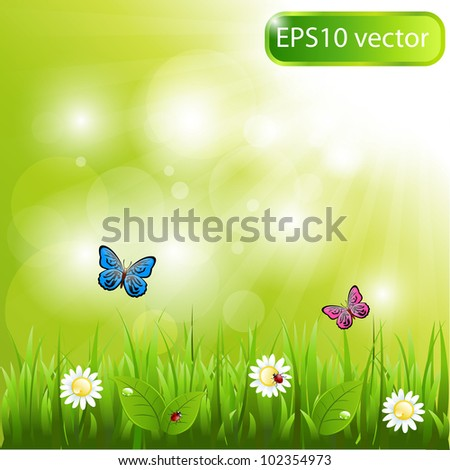 A beautiful scene of nature - stock vector