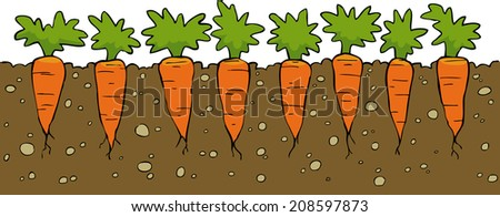 A bed of carrot on a white background vector illustration - stock vector