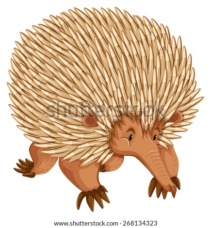 A borwn porcupine on white backbround - stock vector