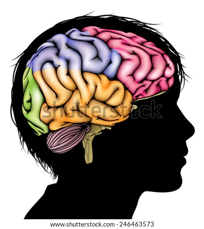 A child's head in silhouette with a sectioned brain. Concept for child mental, psychological development, brain development, learning and education or other medical theme - stock vector