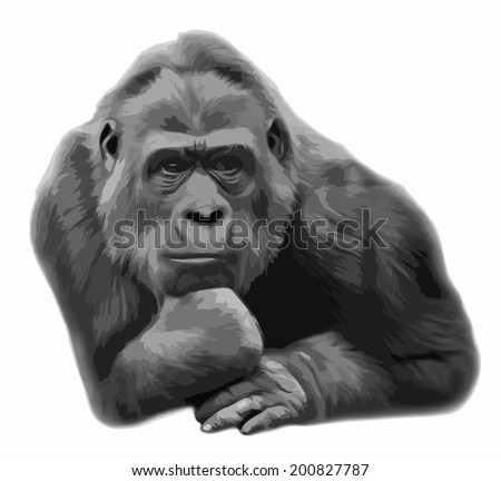 "A gorilla female, lying in pose of the Rodin ""Thinker"", isolated on white background. Human like expression of the wisdom of the great ape, the biggest primate. Amazing vector gray scaled image. - stock vector"