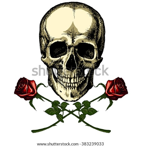 A human skull with two roses on white background - stock vector