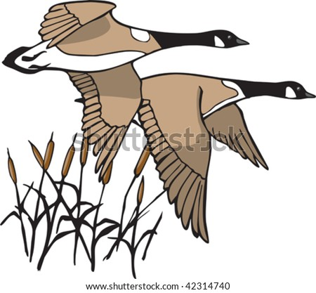A pair of illustrated Canada Geese in flight. Both geese and cattails are on separate layers. - stock vector