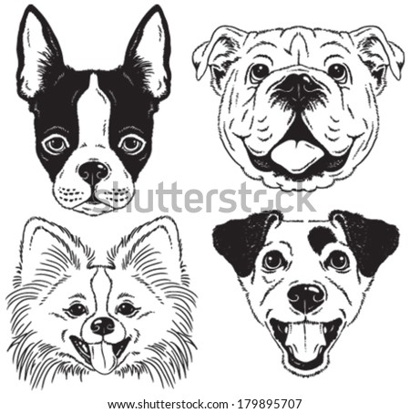 A set of 4 dog's faces: Boston Terrier, English Bulldog, Toy Pomeranian, Jack Russell Terrier. Black and white vector sketches. - stock vector