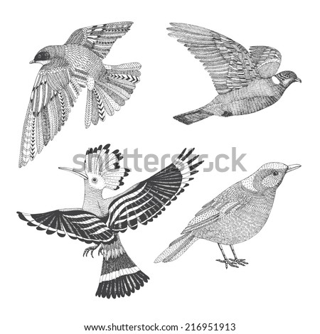 a set of four abstract hand drawn birds: hoopoe, swallow, thrush and wood pigeon - stock vector