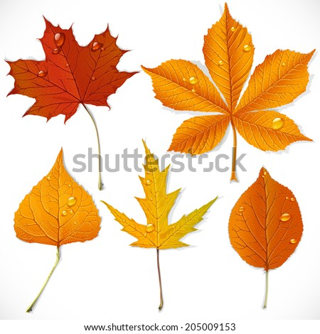 A set of yellow and red autumn leaves isolated on a white background - stock vector