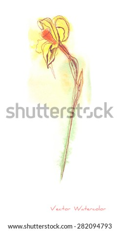 A vector painting of a Narcissus (or Daffodil) flower made in watercolor plus Chinese ink - stock vector