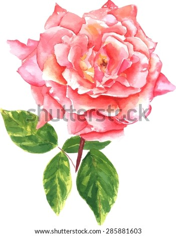 A vintage style watercolour drawing of a pink rose, scalable vector graphic - stock vector