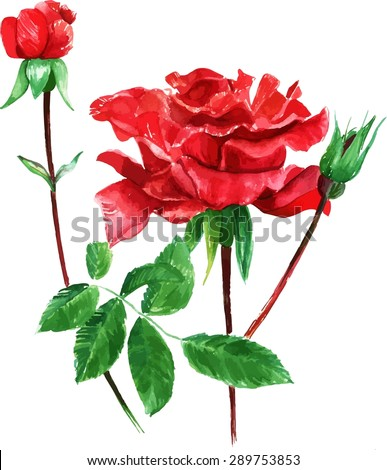 A vintage style watercolour drawing of a red Victorian rose, scalable vector graphic - stock vector