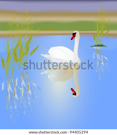 A white swan in a picturesque lake. Vector illustration. - stock vector