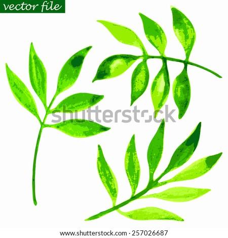 Abstract green foliate watercolor vector - stock vector