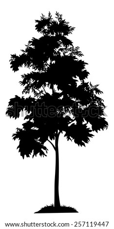 Acacia tree with leaves and grass, black silhouette on white background. Vector - stock vector