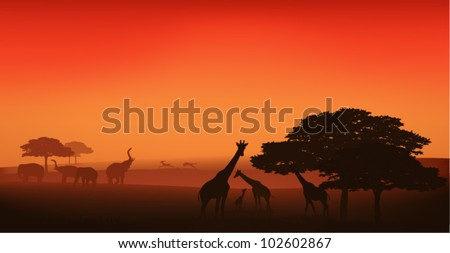 african wildlife editable vector illustration - savannah at sunset - stock vector