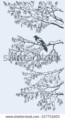 Agile cun pie sit on snow-covered branches of ash with bunches of dry seeds in cold wintertime day. Vector ink drawn backdrop sketchy in art scribble style pen on paper with space for text on sky - stock vector