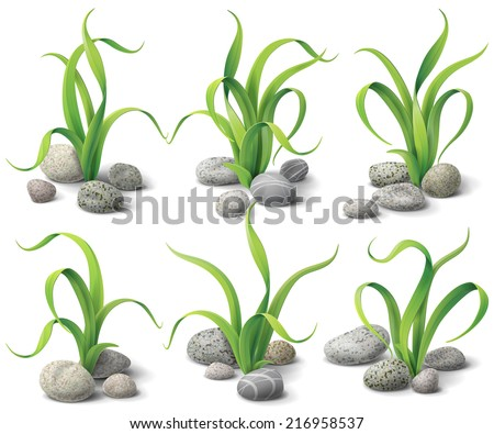 Algae and stones set isolated  on white. - stock vector
