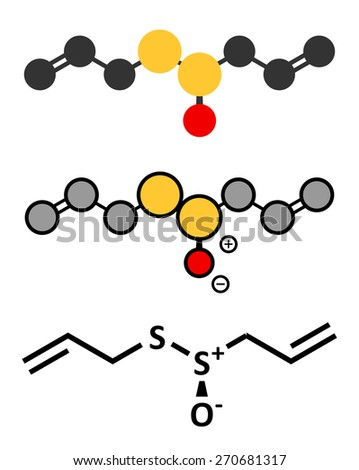 Allicin garlic molecule. Formed from alliin by the enzyme alliinase. Believed to have a number of positive health effects. Stylized 2D renderings and conventional skeletal formula. - stock vector