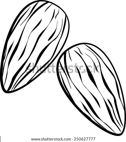 almonds - stock vector