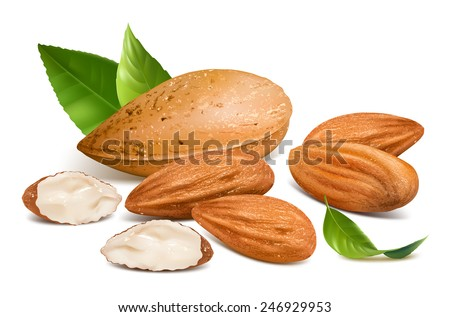 Almonds with kernels and leaves. Vector illustration. - stock vector