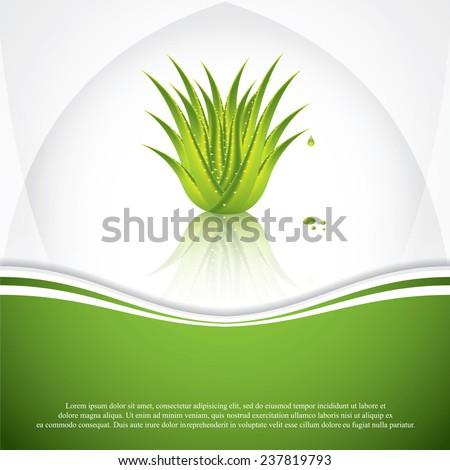 Aloe Vera concept design.Vector - stock vector