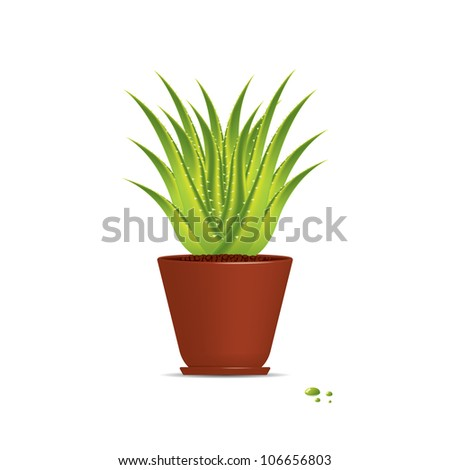 Aloe Vera plant in pot isolated on white.Vector - stock vector