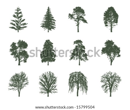 American trees vector illustration - stock vector