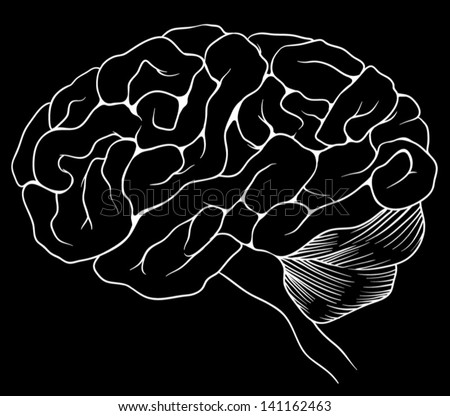 An illustration of the human brain - stock vector