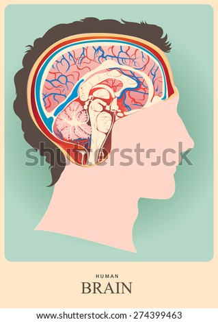 Anatomical representation.Profile of a human head with a colorful symbol of brain. - stock vector