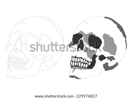 Side View Anatomy Stock-vector-anatomy-of-side