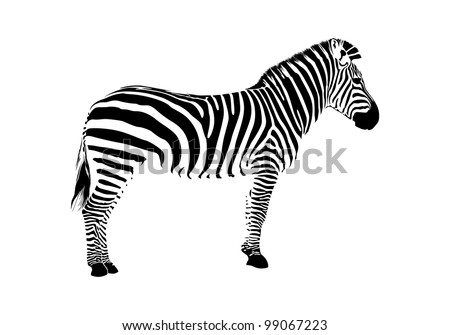 Animal illustration of vector zebra silhouette - stock vector