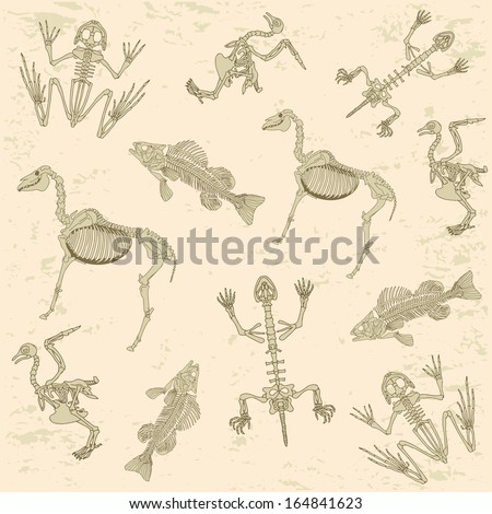 animals anatomy, skeleton of horse, pigeon, frog and turtle, archeology biology  pattern - stock vector