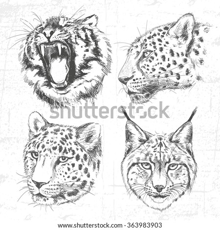 Animals around the World (Africa). Collection of hand drawn illustrations (originals, no tracing). Description: Each drawing comprise of one color. See also other sets of animals. - stock vector