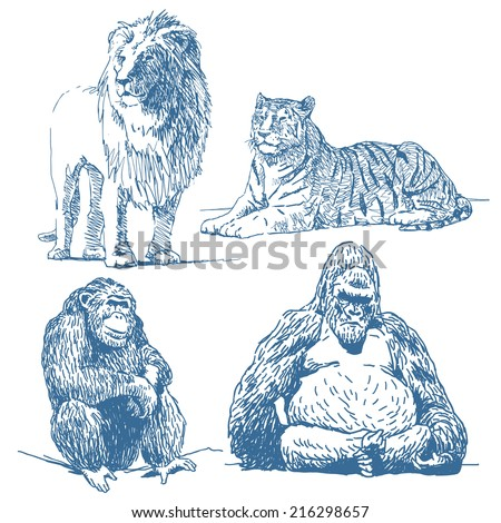 Animals drawings set isolated on white background: lion, lying tiger, ape, gorilla - stock vector