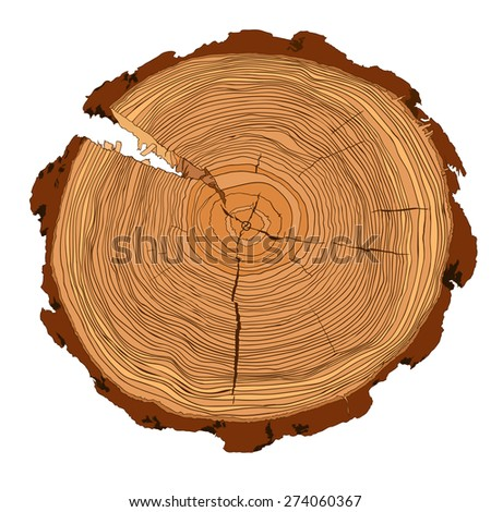 Annual tree growth rings with brown tones drawing of the cross-section of a tree trunk isolated on white. Vector illusration  - stock vector