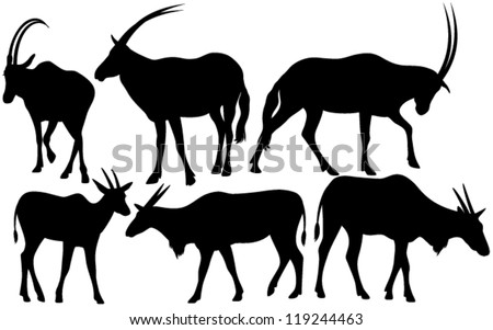 antelopes (Scimitar oryx and Common eland) silhouettes - black outlines over white - stock vector