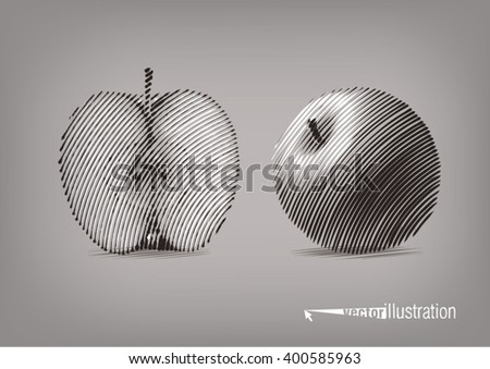 Apple in a cut. Vector artwork in the style of ink drawing - stock vector