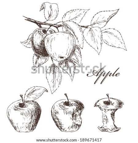 Apples set. Fruits sketch collection. Process from the whole apple to apple cores - stock vector