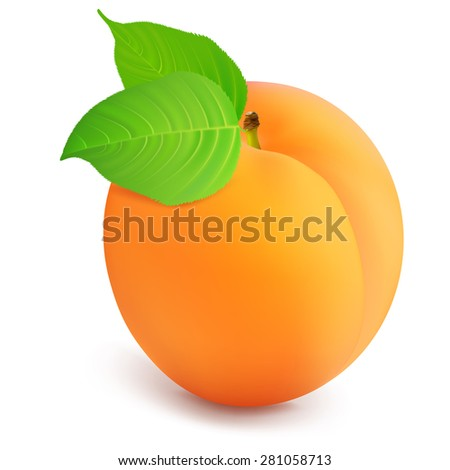 Apricot with leaves on a white background. Vector illustration. - stock vector