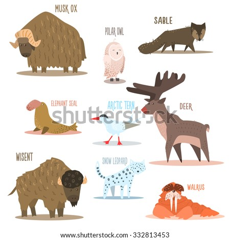 Arctic and Antarctic Animals and Birds. Flat Vector Illustration - stock vector