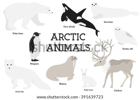Arctic animals collection. Set of flat minimal vector illustrations of polar mammals and birds.Penguin, seal, hare, snowy owl, bear, orca whale, fox, caribou, walrus.Cute cards for memory game.Drawing - stock vector